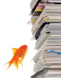 Goldfish Reading